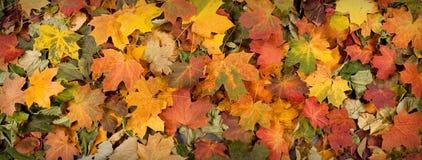 Het beeld van de herfst met verschillende gevallen bladeren stock afbeelding