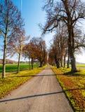 Het beeld van de herfstweg met bladeren en de zon glanzen stock afbeeldingen