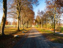 Het beeld van de herfstweg met bladeren en de zon glanzen royalty-vrije stock foto