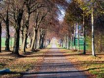 Het beeld van de herfstweg met bladeren en de zon glanzen royalty-vrije stock afbeeldingen