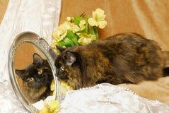 Het Beeld van de Kat van het calico in Spiegel Stock Fotografie