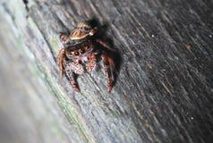 Het Beeld van de spin royalty-vrije stock fotografie