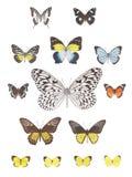 Het beeld van de vlinder Stock Afbeelding