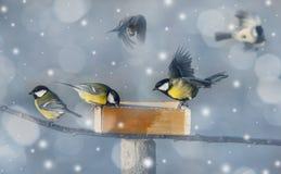 Het beeld van de winter met vogels Stock Foto