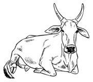 Het beeld van de zeboekoe Royalty-vrije Stock Afbeeldingen