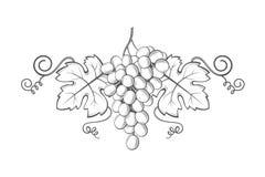 Het beeld van druivenbossen royalty-vrije illustratie
