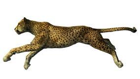 Het beeld van een gepard Stock Foto's
