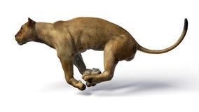 Het beeld van een leeuwin Royalty-vrije Stock Foto's