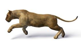 Het beeld van een leeuwin Stock Afbeelding