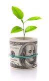 Het beeld van het de groeiconcept van het geld dat op wit wordt geïsoleerd Stock Foto