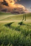 Het beeld van het de zomerlandschap van tarwegebied bij zonsondergang met mooi l Stock Foto's