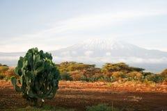 Het beeld van Kilimanjaro Stock Afbeelding