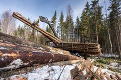 Het beeld van registreerapparaat laadt geoogste boomstammen in bos stock foto