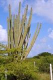 Het beeldhouwwerk van cactussen Royalty-vrije Stock Foto's
