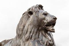 Het beeldhouwwerk van de bronsleeuw binnen op Trafalgar-vierkant, Londen royalty-vrije stock foto