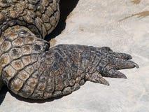 Het been van de krokodil Royalty-vrije Stock Fotografie