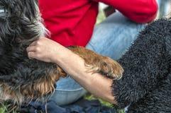 Het been van een hond ligt op een wapen van een vrouw stock fotografie