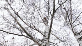 Het begin van de lente vogelhuis hoog op berk stock videobeelden
