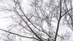Het begin van de lente vogelhuis hoog op berk stock footage