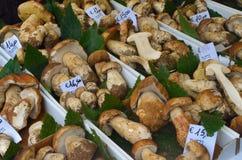 Het begin van de truffelmarkt in Alba (Cuneo) is, gehouden meer dan 50 jaar, het ezelsras Stock Foto