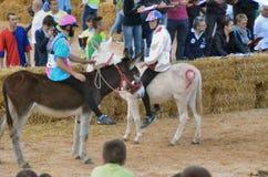 Het begin van de truffelmarkt in Alba (Cuneo) is, gehouden meer dan 50 jaar, het ezelsras Royalty-vrije Stock Foto