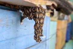 Het begin van het zwermen van de bijen Een kleine zwerm van gefascineerde bijen op kartondocument apiary Royalty-vrije Stock Afbeelding