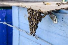Het begin van het zwermen van de bijen Een kleine zwerm van gefascineerde bijen op kartondocument apiary Royalty-vrije Stock Afbeeldingen