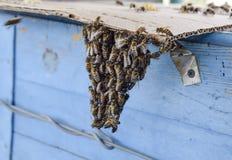 Het begin van het zwermen van de bijen Een kleine zwerm van gefascineerde bijen op kartondocument apiary Stock Foto's