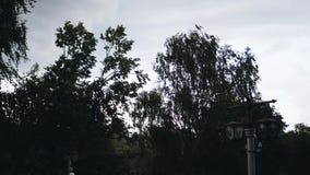 Het begin van zware regen in het stadspark Mening van de eerste verdieping stock videobeelden