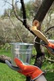 Het behandelen van appelboom met tuinhoogte Stock Foto