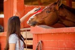 Het behandelen van mijn paard royalty-vrije stock afbeelding