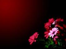 Het behang van bloemen Stock Afbeeldingen