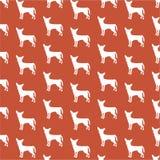 Het behang van Chihuahua Stock Afbeelding