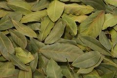 Het behang van de laurierbladsmaakstof met grote diepte van gebied Stock Foto's
