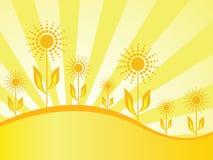 Het behang van de lente met zonnebloemen Stock Foto