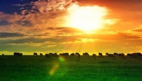 Het behang van de zonsondergang en van het gebied Royalty-vrije Stock Afbeeldingen