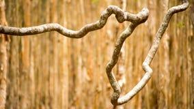Het Behangachtergrond van boomwijnstokken Stock Afbeelding
