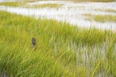 Het Behoud van het moerasland stock foto