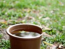 Het behoudsemmer van het regenwater in tuin Royalty-vrije Stock Foto