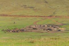 Het Behoudsgebied van Tanzania - Ngorongoro- stock afbeeldingen