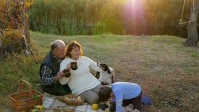 Het bejaarde met de mens drinkt thee dichtbij hond en kleinzoon het spelen in openlucht met egel, familievakantie bij zonsonderga stock video