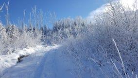 Het bekijken de adembenemende hemel van binnen het Bos royalty-vrije stock foto's