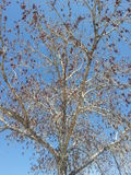 Het bekijken door de takken de blauwe hemel Stock Foto