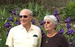 Het bekijken Irissen royalty-vrije stock afbeeldingen