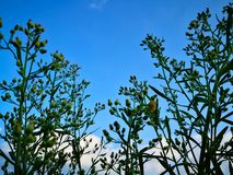 Het bekijken omhoog de blauwe hemel met wolkenachtergrond door natuurlijk stock afbeelding
