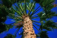 Het bekijken omhoog een palm royalty-vrije stock foto