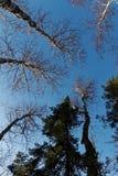 Het bekijken omhoog naar de hemel in Jay Cooke State Park in Minnesota stock foto's