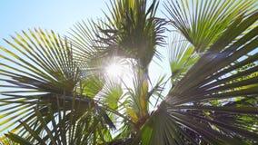 Het bekijken omhoog palm met zon die door glanzen stock footage