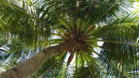 Het bekijken omhoog palm op wind stock video