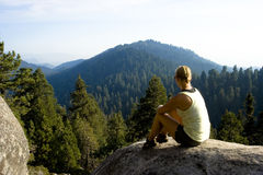 Het bekijken van het bos Royalty-vrije Stock Foto